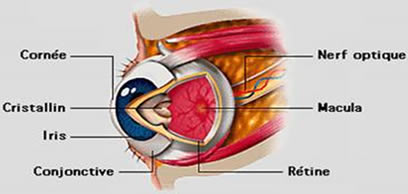 Ophtalmologie Tunisie